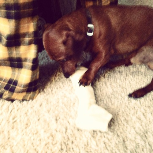 Bribe him with a bone so he will leave us alone for present opening.