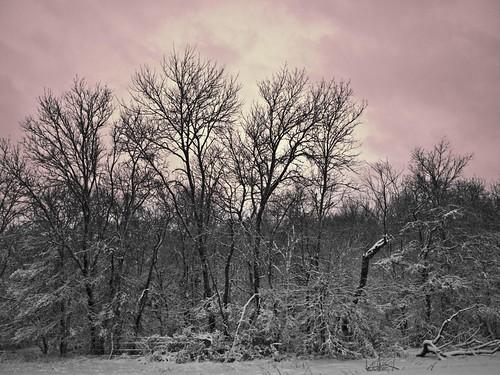 pink sunset sky snow tree clouds rural texas olympus huntcounty commercetx campbelltx huntcountytx gtowneric e620 ericwhodel
