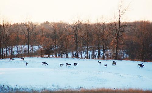 snow_deer_sm