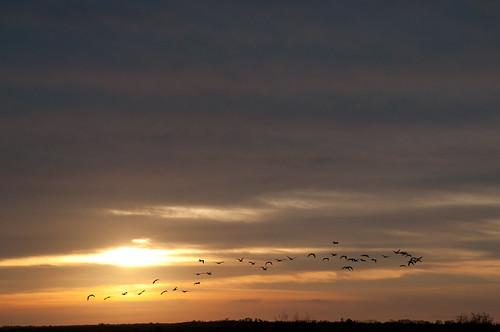 sunset birds florida wildlife
