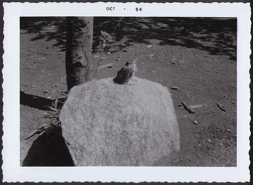 Yellowstone1956_Bird