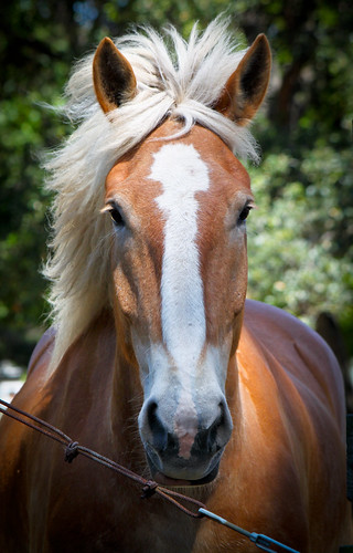 Horse at Ardenwood