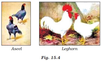 NCERT Class IX Science Chapter 15 Improvement in Food Resources