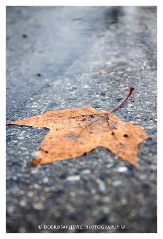 CF foto natječaj listopad: motiv fotografiranja jesen 8414680226_377413c06b_c