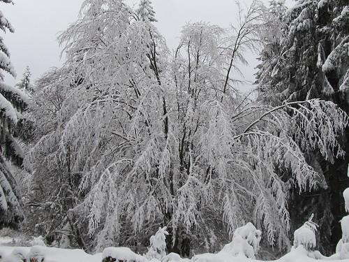 une journee a la neige aux donon 029