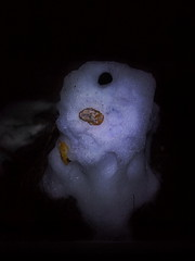Apples of Paradise in Ice and Snow - Lotti`s Snowman Lost his Head in the Rain - Paradiesäpfel in Eis und Schnee