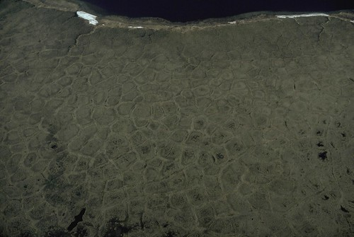 極地的永凍土。(來源:Western Arctic National Parklands)