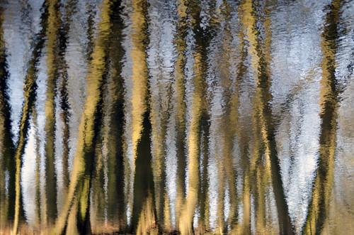 Tree ripple. (2)