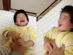 お腹をこちょこちょされるとらちゃん 2013/2/6
