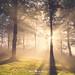 El bosque luminoso by Mimadeo