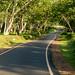 Road in Mudhumalai Tiger Reserve
