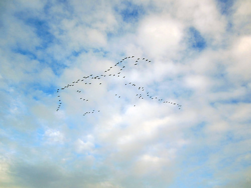 Ducks in the sky!