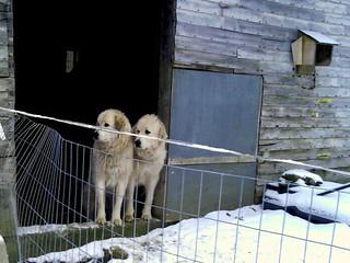 Buffy & Faith in the barn