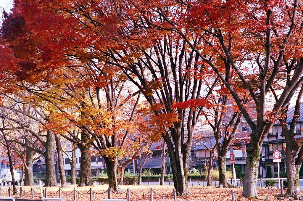 京都-清水寺夜楓