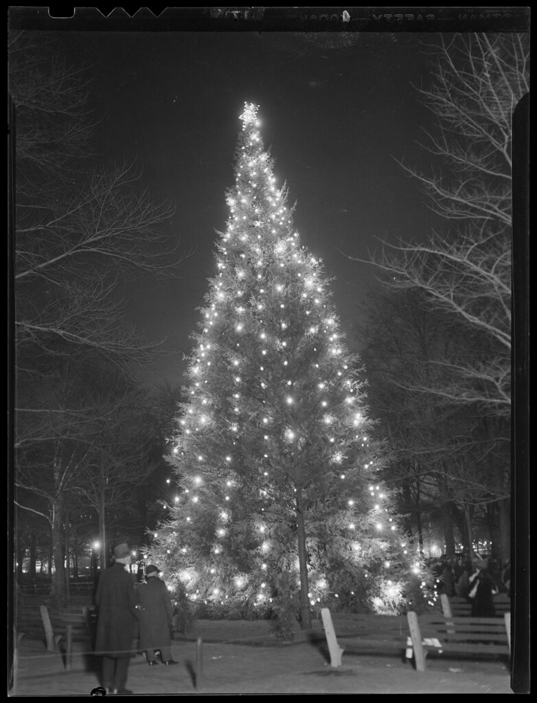 Christmas tree, Boston Common, lit up at night