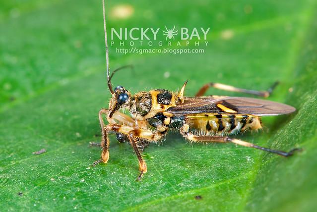Assassin Bug (Reduviidae) - DSC_1724