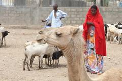 Camel Market (37)
