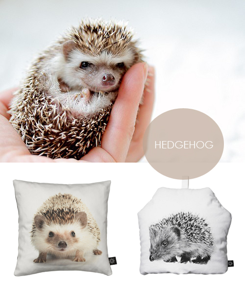 hedgehog2.jpg