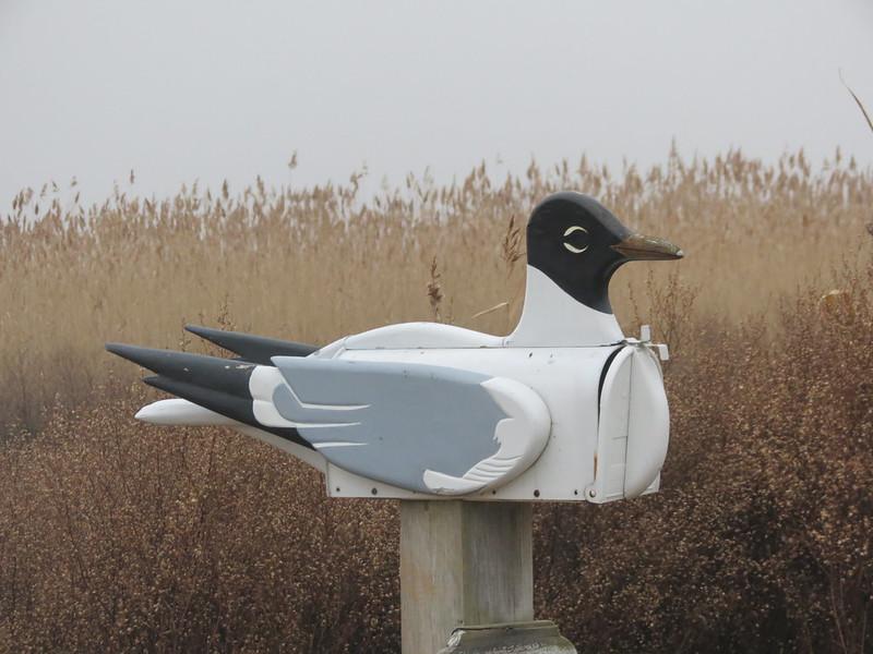 Laughing Gull Mailbox