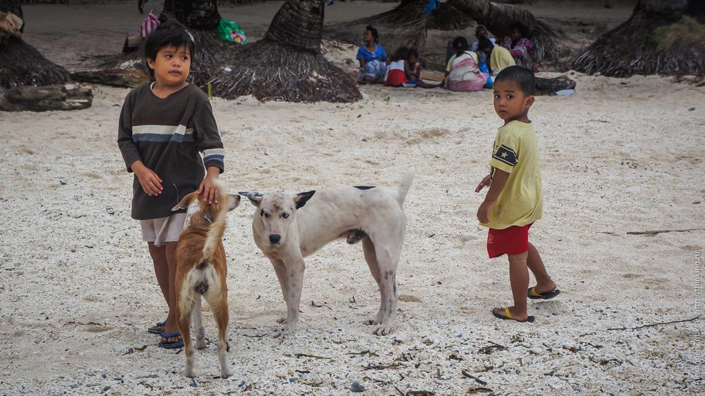 Собаки на острове Боракай