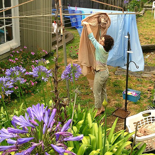 Laundry Day, backyard  (I just used her washer and dryer like a normal person) #nz