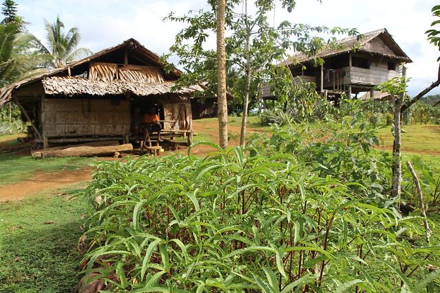 Solomon Islands Agricultural Quarantine Service