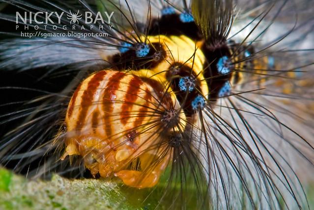 Caterpillar - DSC_7828