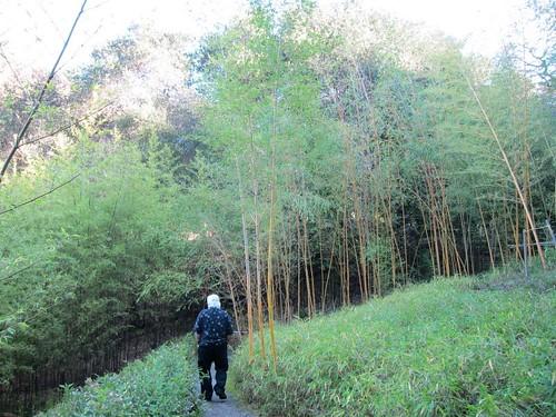 Hakone Japanese Gardens, Saratoga, CA, bamboo IMG_2471