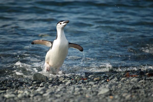 RYALE_Antarctica_Penguins-8