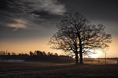 christmas morning light fog sunrise golden splittone