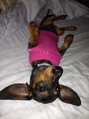 Meet Maggie