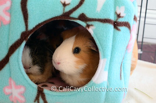 guinea pig fleece cage accessories