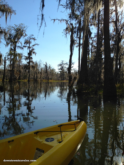 Cajun Country Alligator Swamp Tour 3