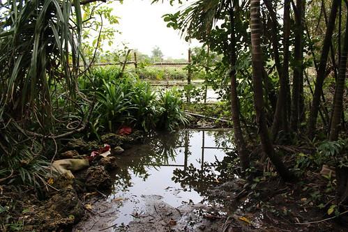 香蕉灣堅實的海岸林維持地下水源,造就全台首屈一指的陸蟹棲地。