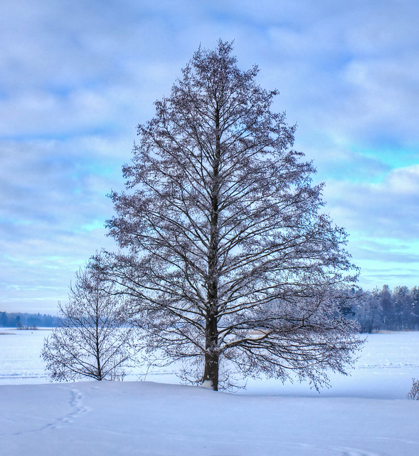 0337 - Lithuania, Trakai, Tree HDR