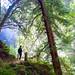 Trail vantage by d o w n s t r e a m