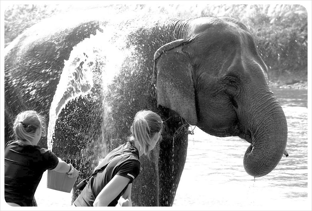 shannon & ana washing the elephant