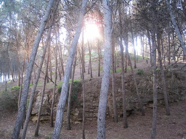 bosque IV