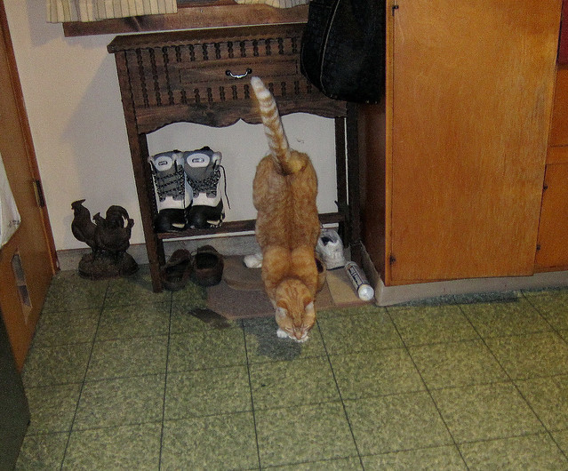 my cat watches tv