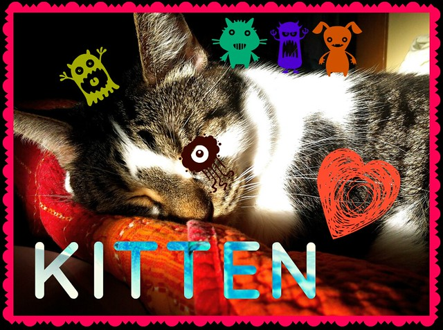 PicMonkey: Kitten