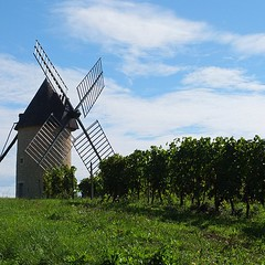 Great weather to harvest grapes! We on the other hand... Chilling by the wind mill!