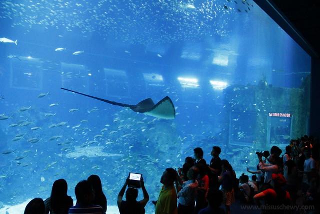 RWS S.E.A Aquarium 603
