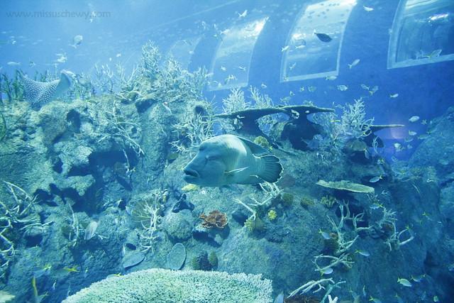 RWS S.E.A Aquarium 623
