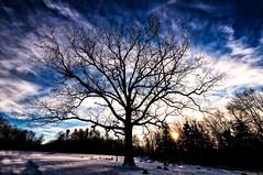[フリー画像素材] 自然風景, 樹木, 雲, 雪 ID:201212281200