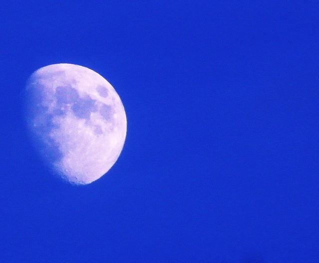 Blue - - - Moon