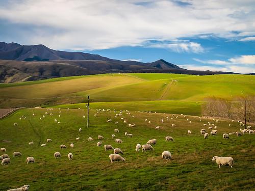 newzealand canterbury middlevalley
