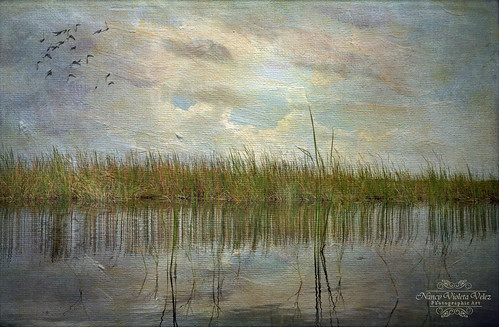 Sawgrass Reflections ~ A World Heritage Site