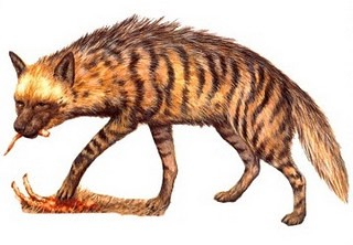 Hyene rayée