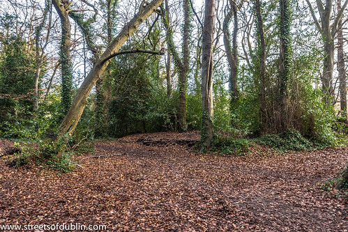 Bushy Park In Terenure (Dublin) - New Years Day 2013 by infomatique
