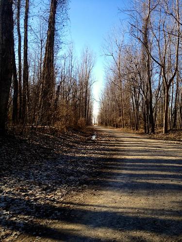 road trees usa holiday america missouri americadecember2012